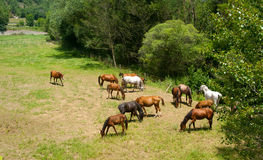 Horses grazing ranch Catalonia Stock Images