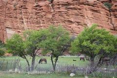 Horses grazing, red rocks in Djety Oguz, Kyrgyzstan Stock Images