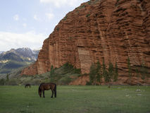 Horses grazing, red rocks in Djety Oguz, Kyrgyzstan Stock Photography