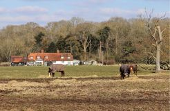 Horses Grazing in Rural England Royalty Free Stock Photography