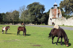 Horses Grazing in Rural England. New Forest Ponies grazing by the roadside Stock Photo