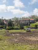 Horses grazing. Horses of Santillana del mar in Cantabria in the north of spain, you can see  some rural houses in a farm with trees  in a sunny day. it´s a Royalty Free Stock Image