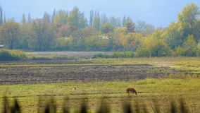 Horses grazing on spring filed in village, eating fresh green grass, farming. Stock footage stock footage