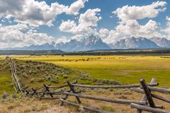Horses grazing sunny pastures in foothills of Grand Tetons, Wyoming stock photography
