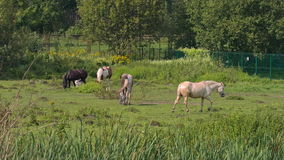 Horses grazing in Sunny weather stock video footage