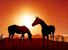 Horses grazing on sunset background Royalty Free Stock Photo