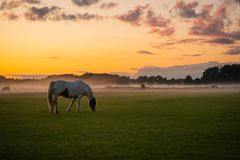 Horses Grazing At Sunset. With mist coming up from the land royalty free stock photography