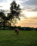 Horses grazing at sunset - vertical Stock Photos