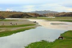 Horses grazing at Ulaanbaatar Suburbs Stock Photography