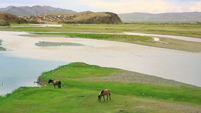 Horses grazing at Ulaanbaatar Suburbs Stock Photos