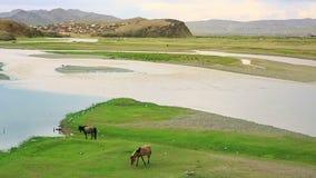 Horses grazing at Ulaanbaatar Suburbs stock video