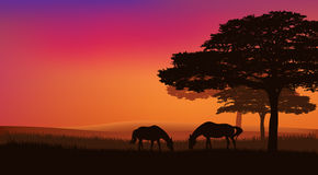 Horses grazing under trees. Pair of horses grazing at sunset under trees - rural evening vector landscape Royalty Free Stock Photo