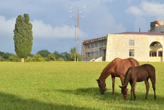 Horses grazing in the urban-type settlement Stock Image