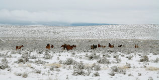 Horses grazing in a winter day Stock Photo