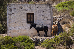Horses in Greek province Royalty Free Stock Photography