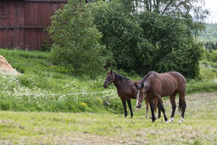 Horses in a green environment Stock Photo