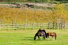 Horses on green grass Stock Photo