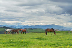 Horses on green grass in the background of the mountain landscape Royalty Free Stock Images
