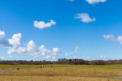 Horses on Green Grassy Field under Bright Blue Sky royalty free stock image
