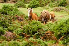 Horses on a green hill Royalty Free Stock Images