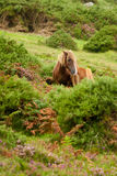 Horses on a green hill Stock Images
