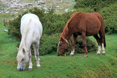 Horses on a green lawn Stock Image