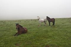 Horses on a green meadow  Stock Photos