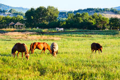 The horses on the green prairie Stock Image
