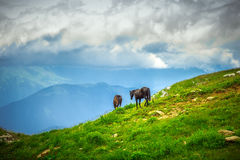 Horses on Green Valley in Mountains rural Landscape Royalty Free Stock Image