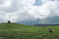 Horses on green wide field and mountain range. Stock Image