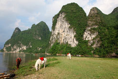 Horses, Guangxi, China Royalty Free Stock Photo