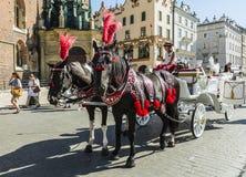 Horses in harness droshky. Stock Images