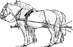 Horses in the harness Stock Photography