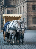 Horses harnessed to the carriage Stock Image