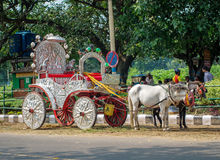Horses harnessed to the carriage  in Kolkata, India. Stock Photo