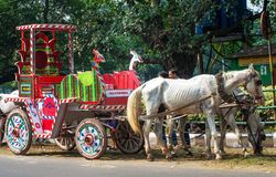 Horses harnessed to the carriage  in Kolkata Royalty Free Stock Image