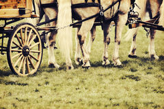 Horses Harnessed to a Wagon - Retro Royalty Free Stock Image