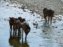 Horses have come to a watering place Stock Photo