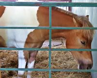 Horses have drowsiness royalty free stock image