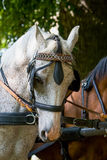 Horses head Stock Images