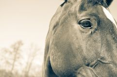 Horses head and background Stock Photos