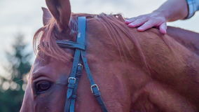Horses head with bridle stock video footage