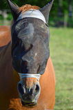 Horses head Royalty Free Stock Photography