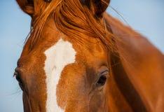 Horses head Stock Image