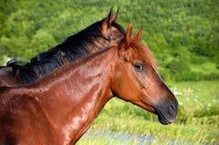Horses heads Stock Photo