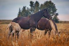 Horses herd royalty free stock photos