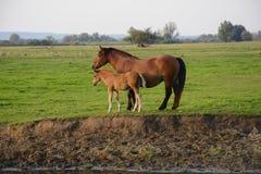 Horses. Herd of horses on green pasture Stock Photo