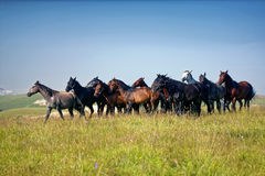 Horses, herd, mountains Stock Photography