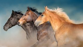 Horses herd portrait in motion. With dark blue sky behind stock photography