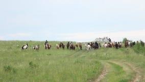 Horses herd running in the field Stock Photos